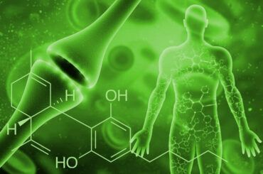 Cannabinoides y sistema endocannabinoide