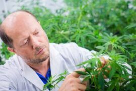 Cannabis para combatir el coronavirus