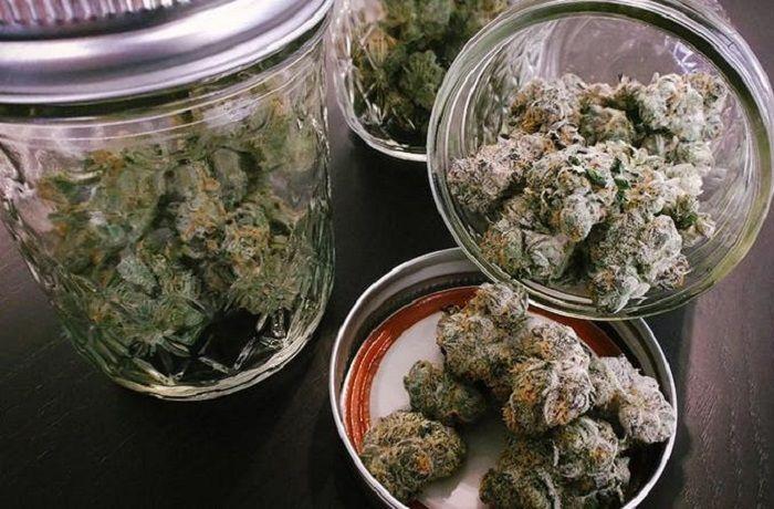 Cómo curar y secar marihuana