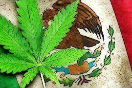 Cannabis medicinal en México