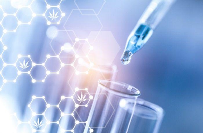 Estudios cientificos sobre cannabis