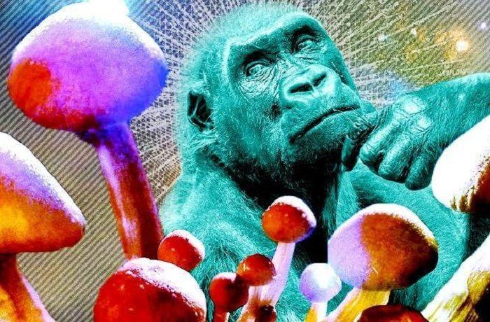 Teoría del mono dopado